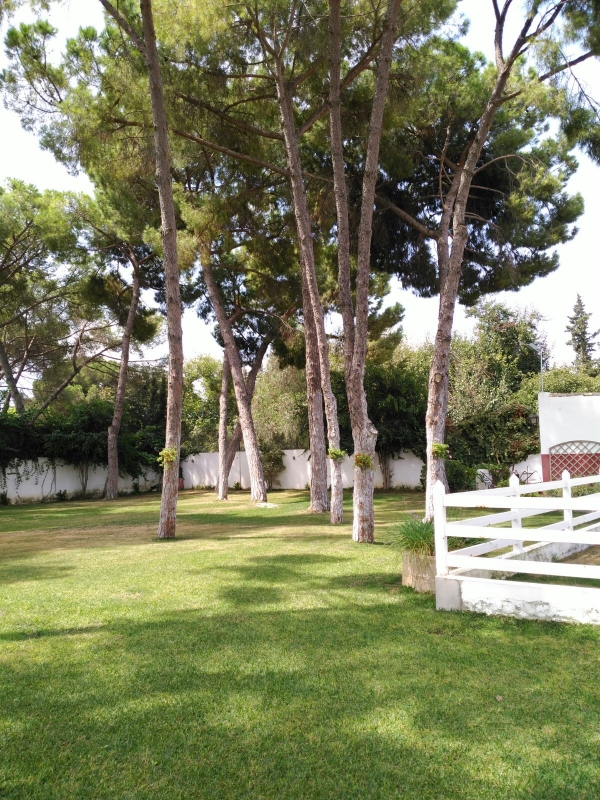 Cortijo for sale near Sevilla – Reference DE401